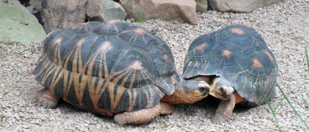 Zu Besuch im Leipziger Zoo