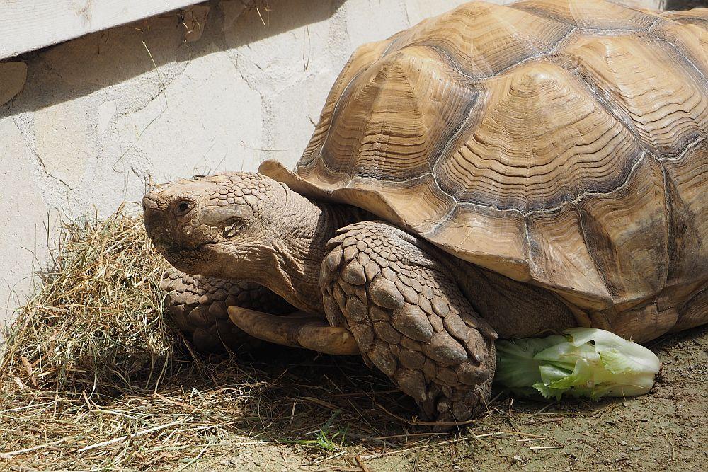 Bild aus dem Zoo Augsburg