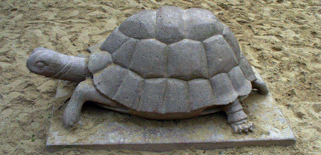 Auf Schildkrötensafari mit Elke Wallrapp (Folge 62)