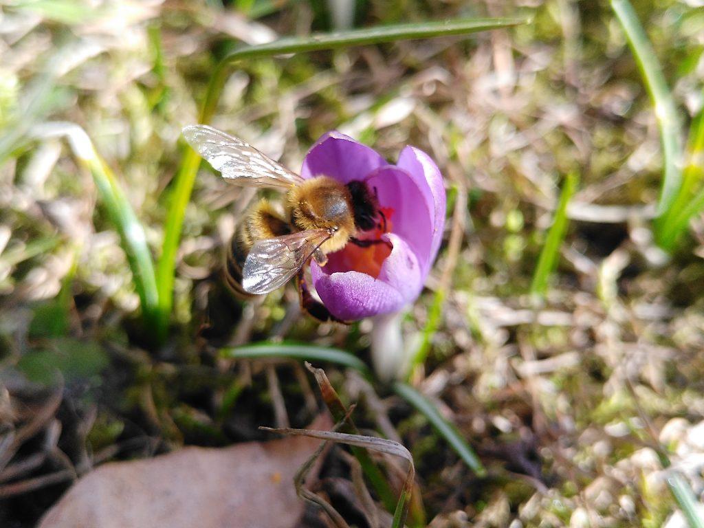 Rettet Die Bienen Mit Einer Speziellen Saatmischung Aktiv Werden