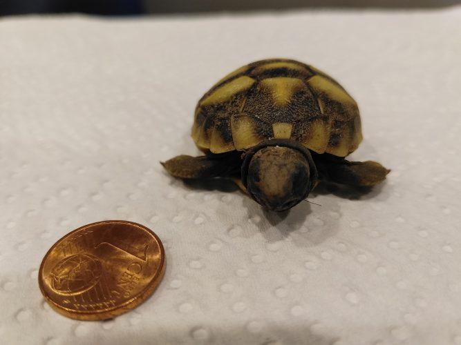 Der Wert einer Griechischen Landschildkröte  - eine Antwort