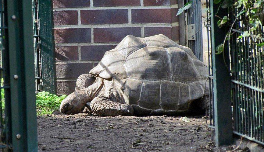 Bei den Schildkröten im Tierpark Berlin - Teil 1