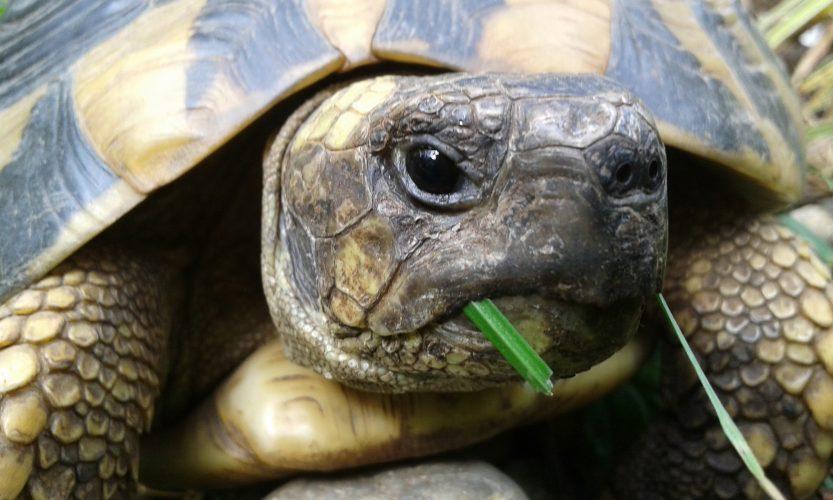Programm der Jahrestagung der DGHT-AG Schildkröten 2020