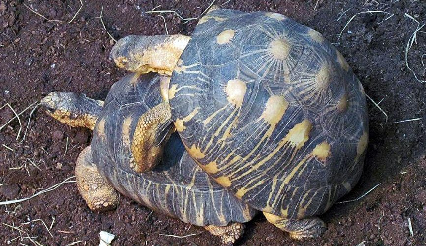 Bei den Schildkröten im Tierpark Berlin - Teil 2