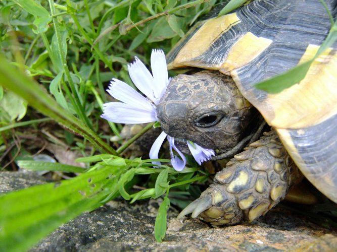 Rückblicke (#8): Allerlei über Futterpflanzen