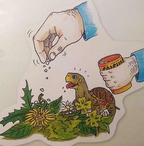 Was Speedy zu erzählen hat - Das Erkundungsbuch Griechische Landschildkröten