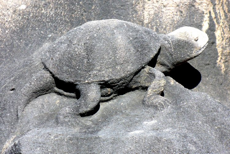 Auf Schildkrötensafari mit Elke Wallrapp (Folge 75)
