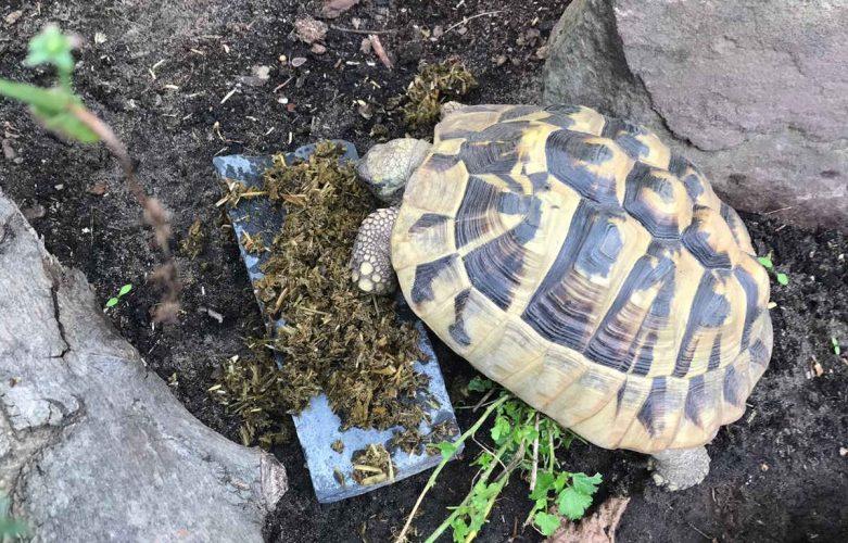 Unverhofft kommt oft - und plötzlich hat man Schildkröten
