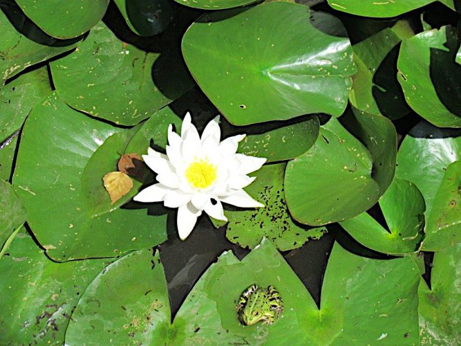Wieder bei den Schildkröten im Amerika Tierpark Limbach – Oberfrohna