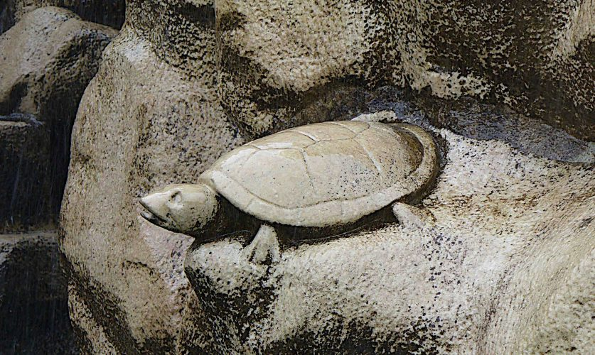 Auf Schildkrötensafari mit Elke Wallrapp (Folge 77)