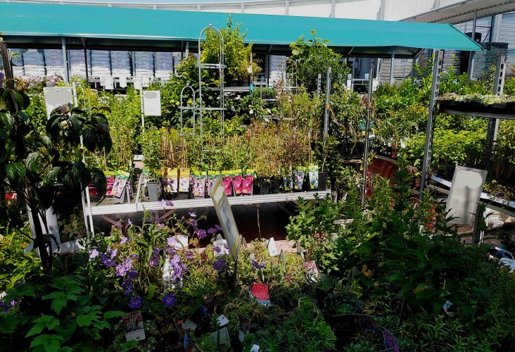 Quarantäne für neue Pflanzen?