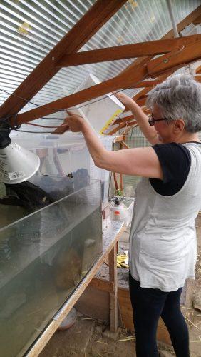 Bau eines Gewächshausaquariums - oder was passiert nach einem Teichbau für ein einzelnes Männchen