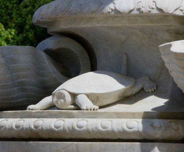 Auf Schildkrötensafari mit Elke Wallrapp (Folge 79)