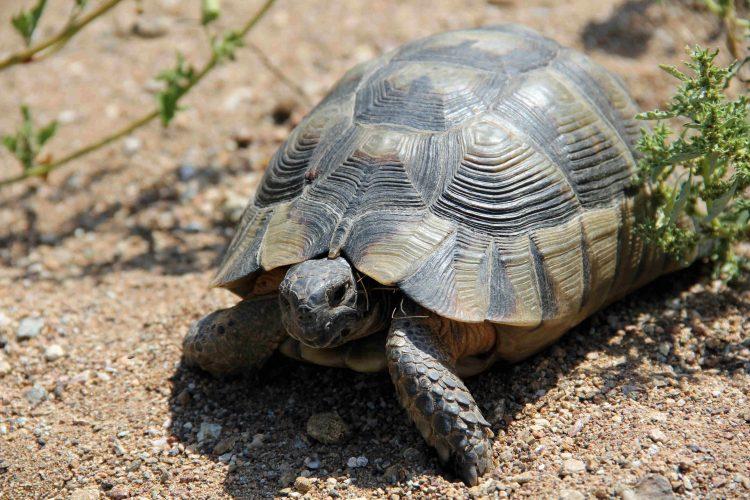 Euböa im Sommer 2017: Viele Steine, wenige Schildkröten (Teil 01)