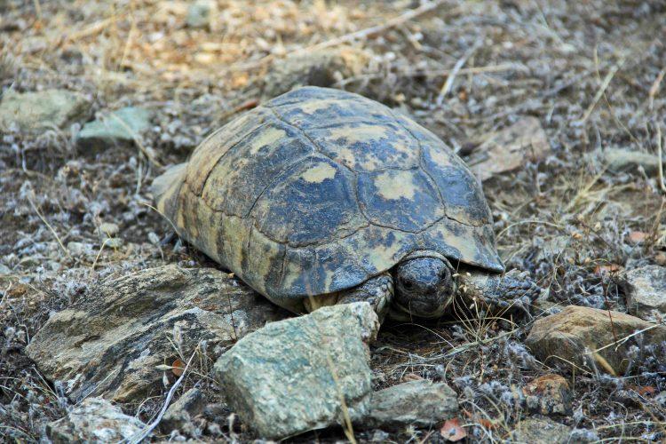 Euböa im Sommer 2017: Viele Steine, wenige Schildkröten (Teil 02)