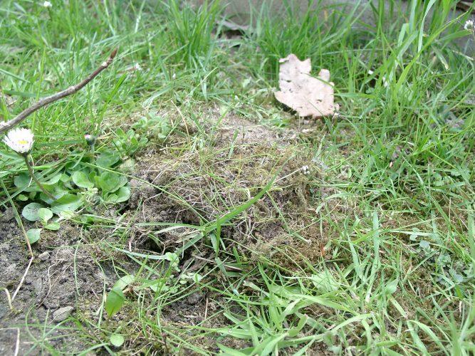 Plötzlich wieder da - eine verschwundene Schildkröte