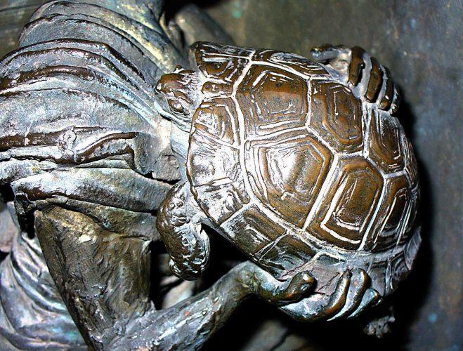 Auf Schildkrötensafari mit Elke Wallrapp (Folge 85)