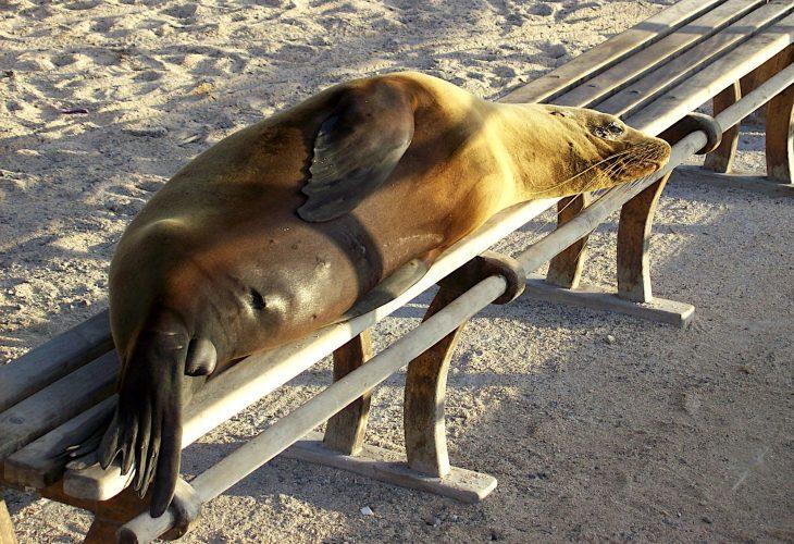 Ein Traum wird wahr… Ein Reisebericht zu den Galapagos-Inseln