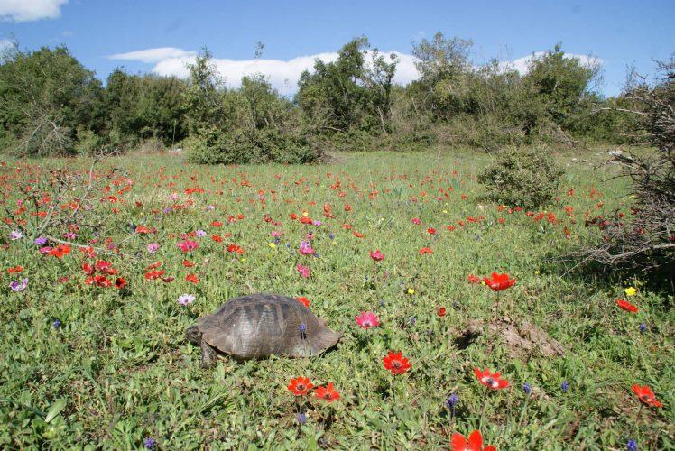 Weidelandschaften – der natürliche Lebensraum der Europäischen Landschildkröten - Teil 01