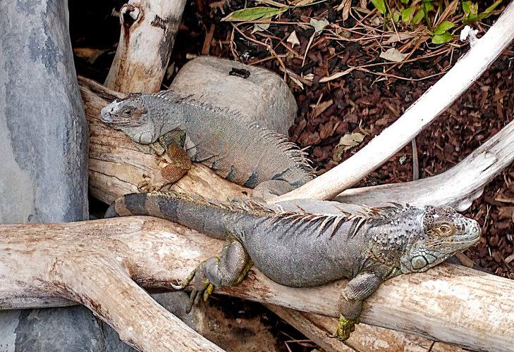 Auf Schildkrötensafari mit Elke Wallrapp (Folge 86)
