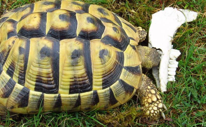 Sepia, Knochen, Ziegenkot - alles, was eine Schildkröte braucht