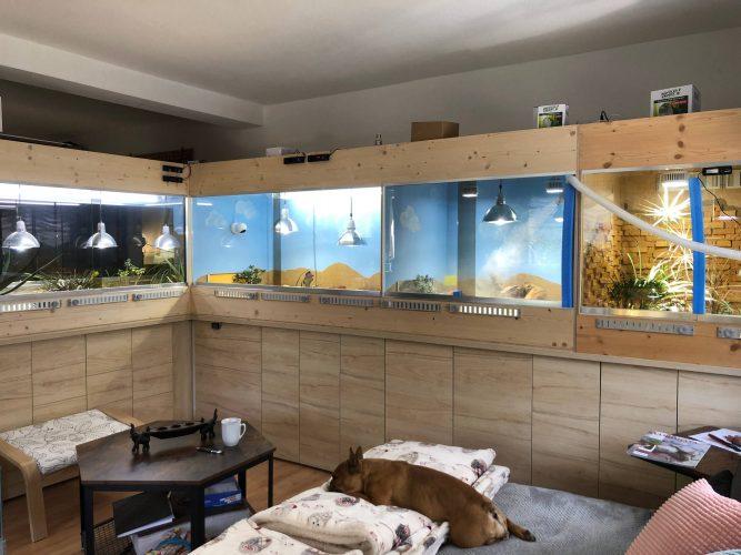Neubau meiner Terrarienanlage für Testudo kleinmanni (Ägyptische Landschildkröten) Teil 1