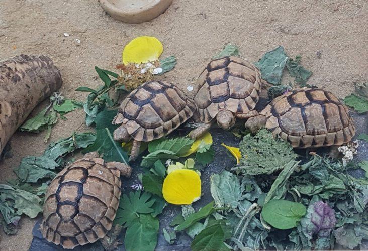 Der Traum von eigenen Schildkröten  - ein Wechselbad der Gefühle mit happy end